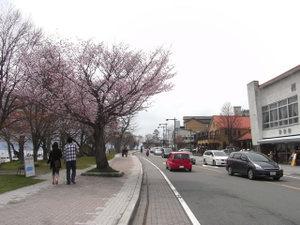 090504_tyuuzenjisakura