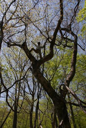 090520_treeclimb