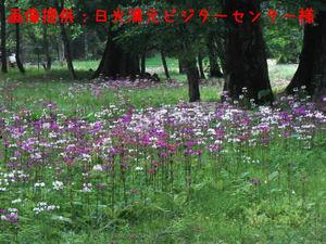 090624_kurinsou