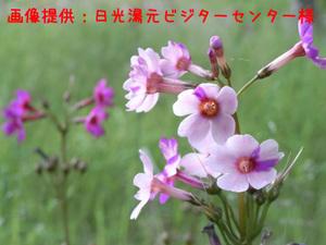090624_kurinsouup