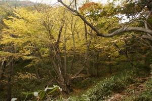 091005_kotougehirohakatura
