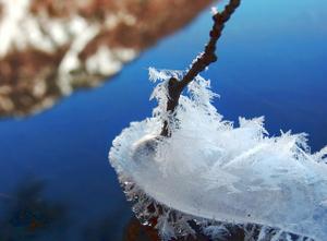 110202_frostflower