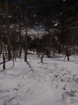 110208_daikassou