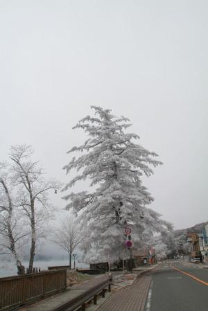 111202_christmastree
