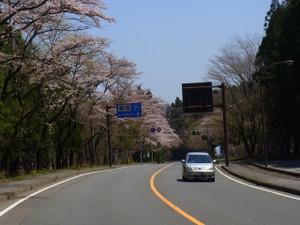 120428_kiyotaki_sakura