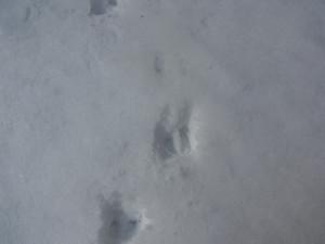 130110_kamosika_tracks