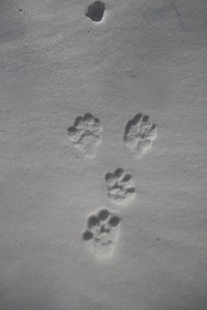 140108_usagi_footprint