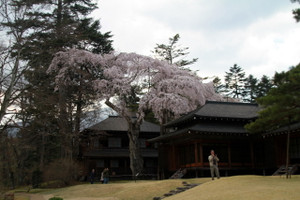 140423_tamozawaniwa