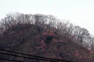140504_yasio