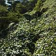 31 黒岩遥拝石~竜巻山1