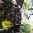 32 黒岩遥拝石~竜巻山2