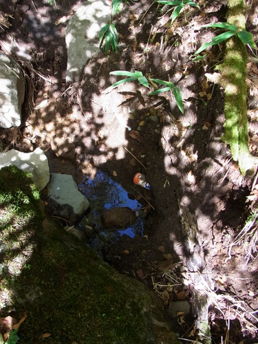 15 黒岩尾根水場 ゴミ