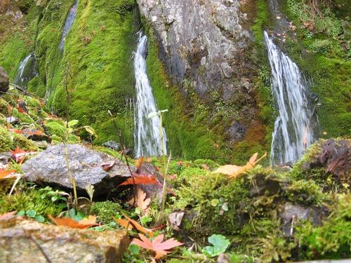 清水と落葉
