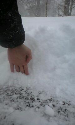 また雪だ〜
