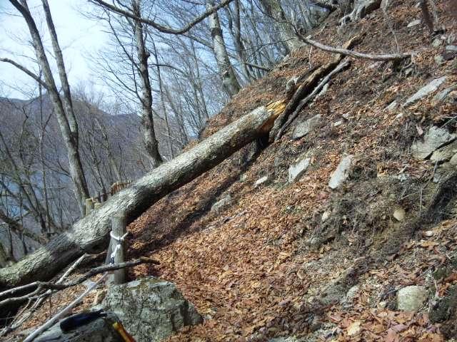 北岸支障木