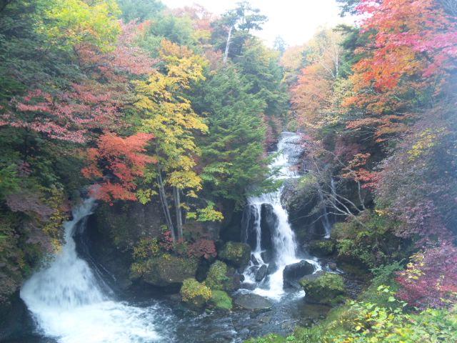 竜頭滝の紅葉が見頃。急げっ!