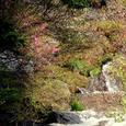 080523_竜頭滝とトウゴクミツバ